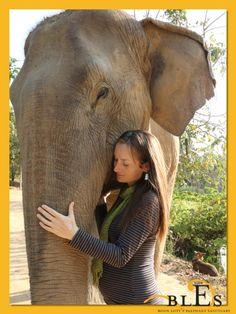Elephant World, Elephant Nature Park, Elephant Sanctuary, Elephant Love, Nairobi City, David Sheldrick Wildlife Trust, Save The Elephants, Gentle Giant, Inspiring People