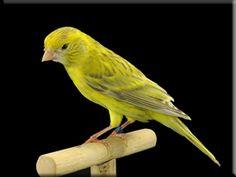 Agate Topaz Yellow Intensive
