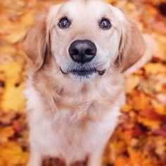 Image may contain: dog and outdoor    #Regram via @BwUgsamBj4f