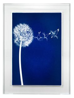 Wish by Barloga Studios (Acrylic Framed Paper) by Wonderwall Studio at Gilt