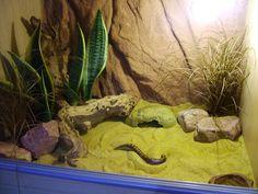 Tortoise Pets – Reasons Why We Love Them! Bearded Dragon Cage, Bearded Dragon Habitat, Snake Terrarium, Terrarium Plants, Reptile Room, Reptile Cage, Snake Breeds, Snake Enclosure, Tortoise As Pets