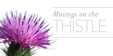 Musings: THE THISTLE Flower Beds, My Flower, Young Living, Green Leaves, Fields, Bloom, Earth, Plants, Plant