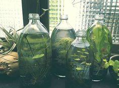 水生植物瓶中花園