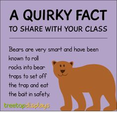 A quirky fact about bears to share with your class - from Treetop Displays. Visit our TpT store for printable resources by clicking on the provided links. Designed by teachers for Pre-Kindergarten to Grade. Facts About Bears, Fun Facts About Animals, Animal Facts For Kids, Fun Facts For Kids, Wtf Fun Facts, Funny Facts, Teaching Quotes, Teacher Resources, Classroom Resources