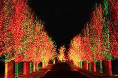 Gorgeous tree lighting!