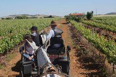 La ruta del Vino Rib.Guadiana en web de viajes de #Ecuador Recorriendo en calesa campos de viñedos extremeños ::: www.ecuadoracolores.com