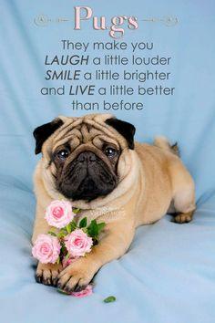 Pugs make you happier