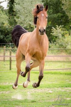 Flying pony! Lonneke Prins Photography