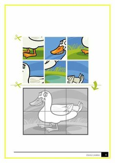 Tuatara,tuatara Coloring Pages,reptiles,colouring Images | HOPE   Land  Animals | Pinterest | School And Activities