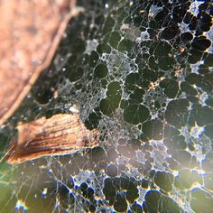 Web-splosions! #macro #olloclip #olloclipmacro #weeklymobilemacro