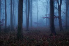 Dramatic Nature Photos Illuminate the Quiet Mystery of the Woods - My Modern Met