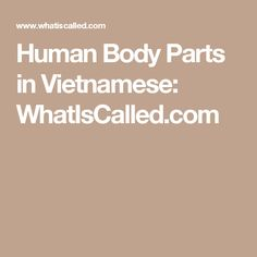 Human Body Parts in Vietnamese: WhatIsCalled.com