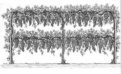Grape Arbor Plans | Copyright (C) 2009 Green Iron Company. All Rights Reserved}