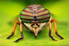 75  Amazing Retina HD Macro Photography Of Bugs World