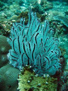 Blanco Negro Coral