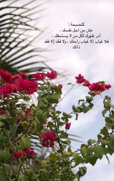 Baby Words, Sweet Words, Love Words, Beautiful Arabic Words, Arabic Love Quotes, Islamic Quotes, Mood Wallpaper, Wallpaper Quotes, Panda Wallpapers