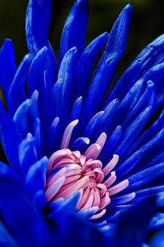 Beautiful blue-colored flower..