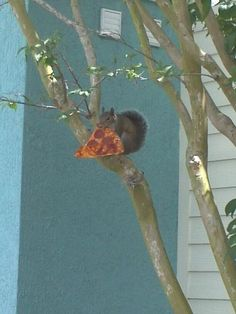 Squirrel with Pizza