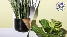 Finding the perfect houseplant means balancing what looks good with your debilitating laziness.