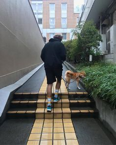 Harry out in Tokio with a Shiba named Belle