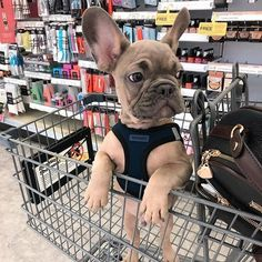 The basics of new puppy care, and general puppy health and maintenance. We want nothing but the best for all puppies everywhere! Super Cute Puppies, Baby Animals Super Cute, Cute Baby Dogs, Cute Little Puppies, Cute Dogs And Puppies, Cute Little Animals, Cute Funny Animals, Doggies, Baby Pugs