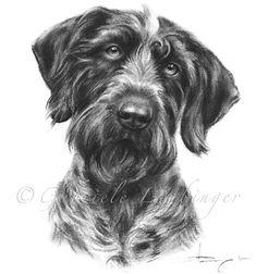 Art by Gabriele Laubinger Funny Dog Memes, Funny Dogs, Animals And Pets, Cute Animals, Dog Anatomy, Dog Presents, Pointer Dog, Dog Shaming, Dog Paintings