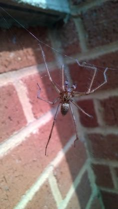 Photograph Tegenaria agrestis - Yard Spider by Claire Toffolo on 500px