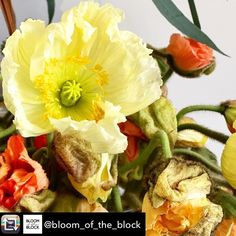 "Repost from @bloom_of_the_block """"I'm popping up like this poppy this weekend! It'll be plants galore for you lovely lot to fill your homes with or gift to those ya love/like or those you forgot to get a birthday present for and you're meeting them in ten mins! <--That's happened a lot and I'm glad I've swooped in to the rescue! """" Bloom of the block pop up @mirthmarvele17  12-7pm (earlier start this weekend)  Sat  Sun  The @e17designers market is also on this weekend just over the road so…"