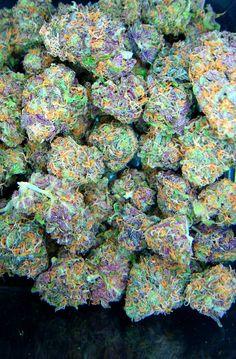 Buy OG-kush in Bulk - King Flavours Marijuana Plants, Cannabis Plant, Cannabis Seeds Online, Cannabis Seeds For Sale, Kingston, Medical Marijuana, Weed, Herbs, Plants
