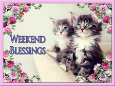 Greeting Weekend Fun, Happy Weekend, Happy Friday, Today Is Friday, Friday Saturday Sunday, Morning Pictures, Morning Pics, Creative Design, Good Morning