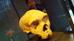 Twitter / csix: First neanderthal skull ever ...