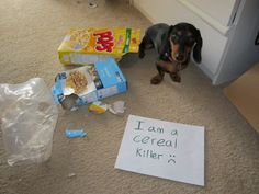 dogshaming:    Lady the Cereal Killer.