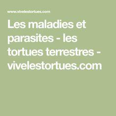 Les maladies et parasites - les tortues terrestres - vivelestortues.com Les Parasites, Math Equations, Tortoise, Shell