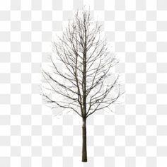 Trees, Abstract, Google, Artwork, Work Of Art, Wood Illustrations, Wood, Plant