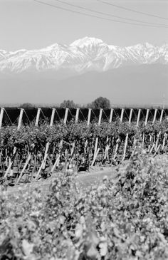 High Altitude Wines - Zuccardi's high altitude alluvial soils of the Uco Valley that grow superior fruit. http://www.winesellersltd.com/wine-brand/Zuccardi.html