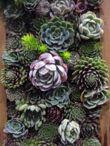 Mod Vintage Life: Succulents