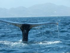 whale watching greenland