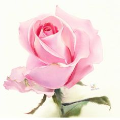 Watercolor without Drawing by LaFe Watercolor Artwork, Watercolor And Ink, Watercolor Flowers, 1 Rose, Rose Art, Botanical Drawings, Botanical Art, Rose Oil Painting, Paper Roses