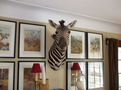 US $2,800.00 Used in Collectibles, Animals, Wild Animals