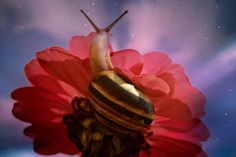 On the way to the top . #macro #nature #animals #snail #flowers #colors #sky #pink #fantasy #magic #garden #night # #photo #photography #fliiby #images #yyazilim #people #nature