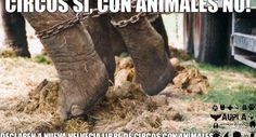 "· Petition to Declare New Helvetia ""Free Circuses with Animals"" · Change.org"