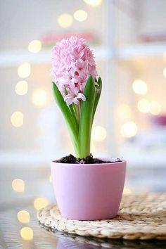 Flores mais lindas de toda internet: http://iloveflores.com/flor-linda-fotos-dicas-imagens-de-flores-lindas-e-maravilhosas/ #iloveflores