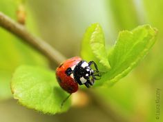 Macro-shot of a ladybug