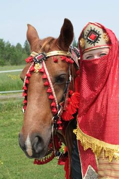 Red & Gold Arabian Horse Costume (4).JPG (534×800)