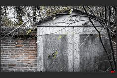 https://flic.kr/p/B1av7i | Autumn at the Jewish cemetery in Ferrara | © All rights reserved. Use without permission is illegal.