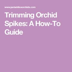 Trimming Orchid Spikes: A How-To Guide