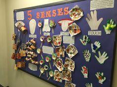 Five senses bulletin board