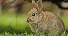 rabbit in grass wallpaper 4k ultra hd wallpaper