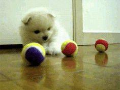 Aww, puppy wants a ball.