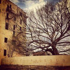 Oklahoma CIty Bombing Memorial & Museum -- The survivor tree.
